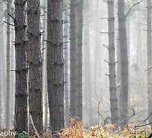 misty woodland by Steve Shand