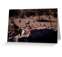 All in a flap Greeting Card