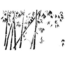bamboo forest Photographic Print