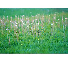 Langbourne Meadow, Oxfordshire Photographic Print