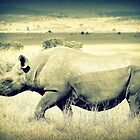 The Rhinoceros by stevefinn77