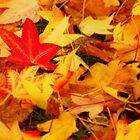 Autumn Leaves by stevefinn77