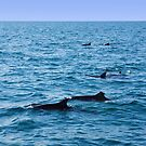 Ocean full of dolphins by georgieboy98