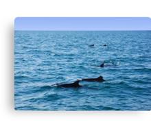 Ocean full of dolphins Canvas Print