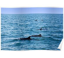 Ocean full of dolphins Poster