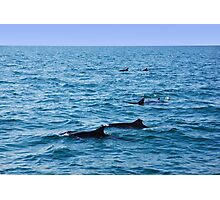 Ocean full of dolphins Photographic Print
