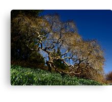 2013 Calendar - Winterthur - July Canvas Print