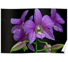 Captivating Orchid Poster