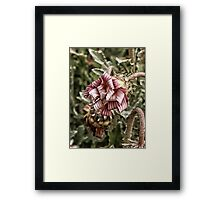 ribbon curls Framed Print