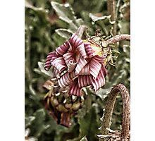 ribbon curls Photographic Print