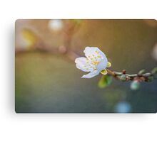 Longing for sunshine Canvas Print