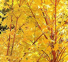 Yellow Maple Leaves by Sharon Woerner
