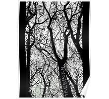 """Bare Naked Trees in Winter"" Poster"