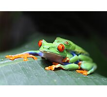 Red Eyed Tree Frogs Photographic Print