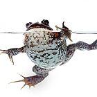 Pobblebonk frog. by Cindy McDonald