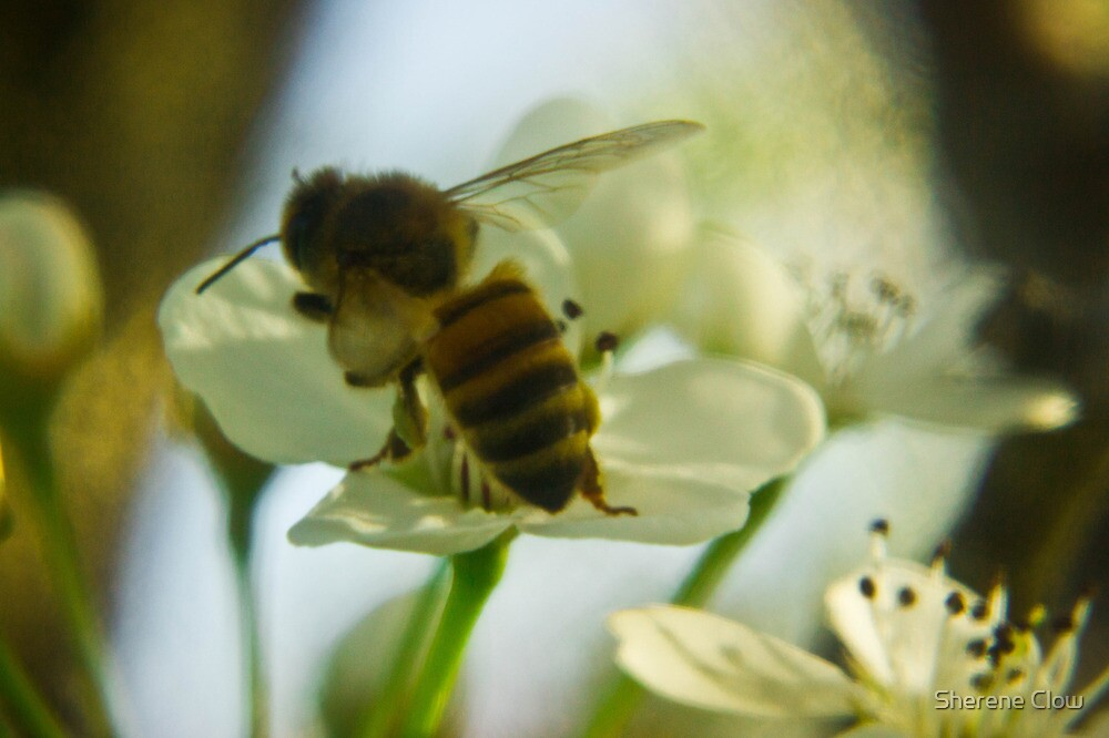The Busy Bee Photo 1 by Sherene Clow