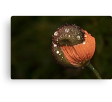 """""""Protected by my Rain Hat..."""" Canvas Print"""