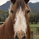 Rosie, the Clydesdale. by Withns