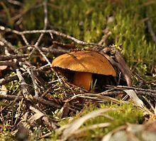 yellow mushrooms by mrivserg