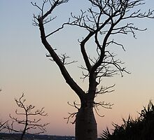 Boab Tree by SoulSparrow