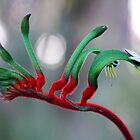 Red Kangaroo Paw, Australia by SoulSparrow