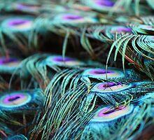 Feathers in Detail by Jillian Holmes