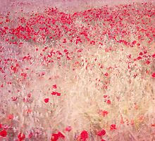 fields of poppies by Guido Montanes