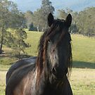 Sienna - Friesian Mare by louisegreen