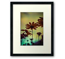 Flowerscapes - Evening Sun Framed Print