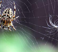 Spider in web . by vonniepyn