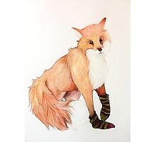 Fox with striped socks Photographic Print
