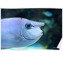 Pinocchio fish Poster