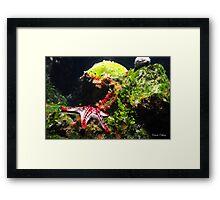 Starfish land Framed Print
