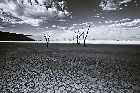 The Barren Land of Dead Vlei by Jill Fisher