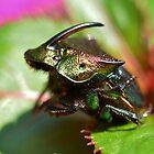 Rainbow Scarab Beetle by Kathy Baccari