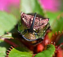 Rainbow Scarab Beetle I by Kathy Baccari
