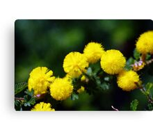 wild flower season again 2 Canvas Print