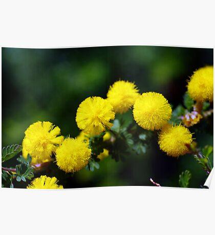 wild flower season again 2 Poster