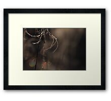 Touch of Winter VIII Framed Print