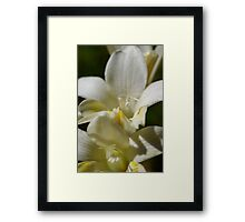 wild flower season again #3 Framed Print