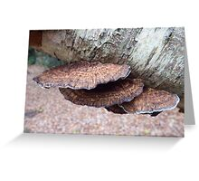 Fungi in the Woods Greeting Card