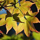 Autumn Air by savvysisstudio