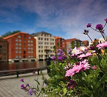 Flowers in Trondheim by Dominika Aniola
