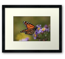 The Migratory Monarch Framed Print