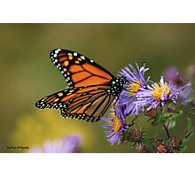 The Migratory Monarch Photographic Print