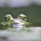Frog in a Fountain by savvysisstudio