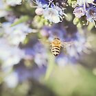 Busy Bee by sunrisern