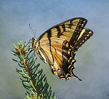 The Striking Swallowtail by KatMagic Photography