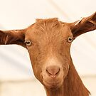Ginger Goat by Mark Hughes