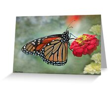 Monarch on Zinnia  Greeting Card